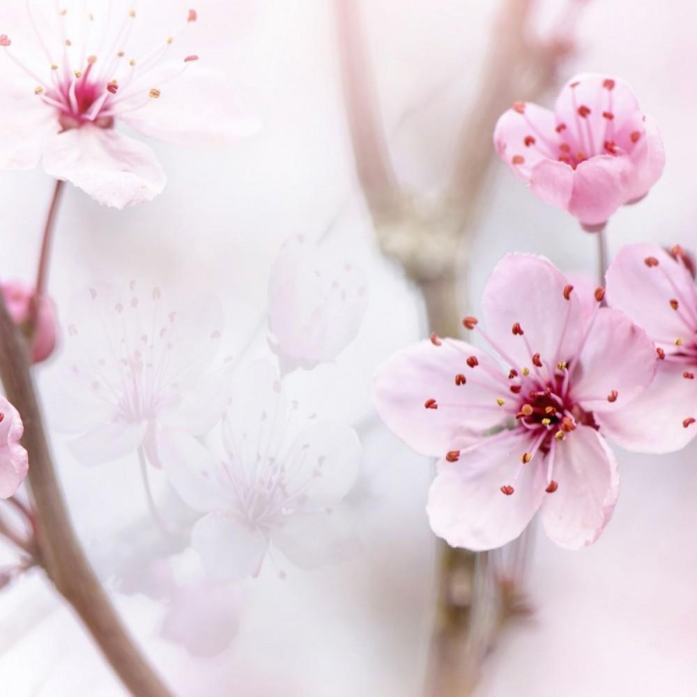 Пролетта и фитонцидите